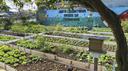 Programa de incentivo a hortas comunitárias é aprovado pelos vereadores.